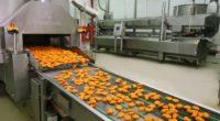 Для приготовления овощных полуфабрикатов можно использовать большинство из существующих видов овощей. Причем сами овощи могут быть не только свежими, но и сушеными, солеными, маринованными и т.д. Итак, какие процессы промышленного […]